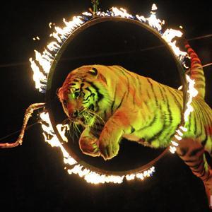 Цирки Самары