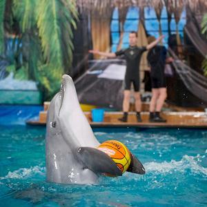 Дельфинарии, океанариумы Самары