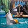 Дельфинарии, океанариумы в Самаре